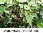 Stock photo dragonflies perched on the branch tree and flowers 1480558088