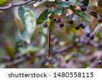 Stock photo dragonflies perched on the branch tree and flowers 1480558115