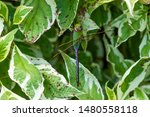 Stock photo dragonflies perched on the branch tree and flowers 1480558118