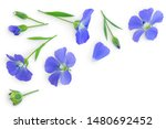 Flax Flowers Or Linum...