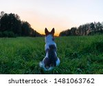 Stock photo silhouette of a white dog a dog sits and looks at a beautiful golden sunset sunrise near a 1481063762