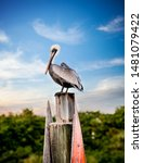 Pelican On A Post With Blue Sk...