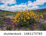 A Super Bloom Of Flowers In The ...