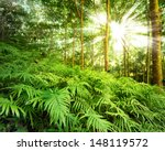 forest nature background. fern... | Shutterstock . vector #148119572