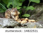 Chipmunk With Peanuts.