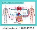 scientific medical illustration ...   Shutterstock .eps vector #1482347555