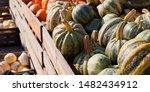 Italian Pumpkin Tonda Padana...