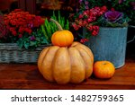 Colorful Flowers And Pumpkins...