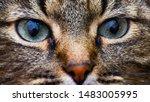 Beautiful Cat Portrait. Close...