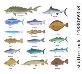 fish set. collection of aquatic ... | Shutterstock . vector #1483099358