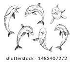 dolphin sketch. hand drawn...   Shutterstock .eps vector #1483407272