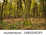 Tree Trunk In A Forest With...