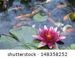 Pink Water Lily Flower Bloomin...