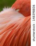 Close Up Pink Flamingo