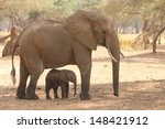 Stock photo elephant calf being shaded by mum 148421912