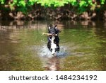 Dog Playing In Water Outside....