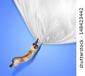 Stock photo image of jumping siamese cat playing with with sheet 148423442