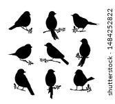 Black Silhouette Of Birds. Big...