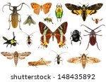 set of insects on white... | Shutterstock . vector #148435892