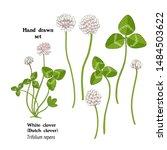 illustration of white clover ... | Shutterstock . vector #1484503622