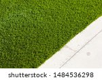 Newly Installed Artificial Grass Next To Walkway. - stock photo
