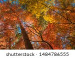 Multi Colour Trees In The...