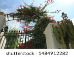Arbor With A Flowering...