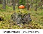 Little Orange Mushroom Standing ...