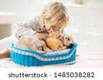 Stock photo child with baby dog and cat kids play with puppy and kitten in a basket little boy and american 1485038282