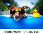 Stock photo dog on blue air mattress in refreshing water 148509158