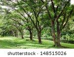 samanea saman   Shutterstock . vector #148515026