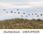 Grey Geese In The Area Of The...