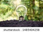 A Tree Grows In Light Bulbs ...