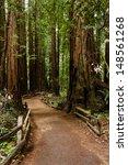 Hiking Trail Leads Through A...