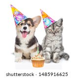 Stock photo corgi puppy and tabby kitten in birthday hats with cupcake isolated on white background 1485916625