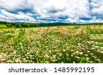 summer meadow flowers field...