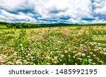 Summer Meadow Flower Landscape. ...
