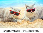 Two Cats Wearing Sunglasses...
