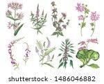 botanical watercolor set of... | Shutterstock . vector #1486046882