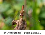 Stock photo dragonfly resting on a dried flower dragonfly landed to enjoy the sun 1486135682
