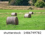Hay bales on a green cropfield during a late summer day. Sweden