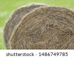 Closeup of hay bale on a green cropfield during a late summer day. Sweden