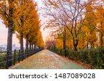 Autumn Road In The Park Seoul...
