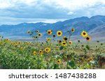 Yellow Wildflowers With The...
