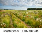 Wild Flower Meadow With Track...