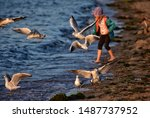 Little Girl Feeding Seagulls A...