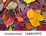 abstract background of autumn... | Shutterstock . vector #148803995