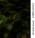 Jungle scene natural foilage tropical