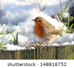Robin Red Breast Looking For...