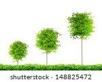 Three Trees  Three Rounded...